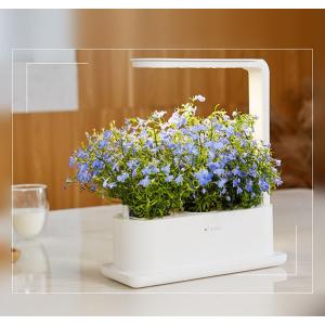 Интеллектуальный экологический плантатор Xiaomi Tiny Green 3 pcs