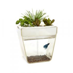 """Набор для выращивания растений и ухода за рыбкой """"Акваферма"""""""